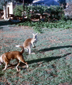 Playmates in Onslow, Western Australia