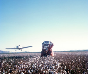 The dusting and harvesting of cotton at the Ord River Project in the far north of Western Australia
